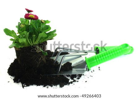 various tools for planting with daisies on a white background