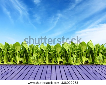 vegetable in farm sky background.