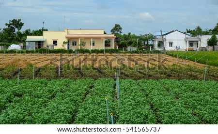 Vegetable plantation in Mekong Delta, Vietnam. The Mekong Delta in southern Vietnam is a vast maze of rivers and swamps.