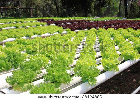 Hydroponics farm vegetables hydroponics farm fresh hydroponics
