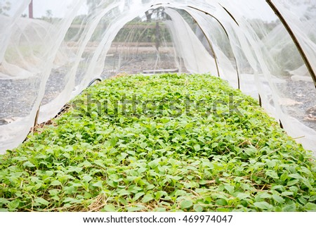 Vegetables in Covered Netting