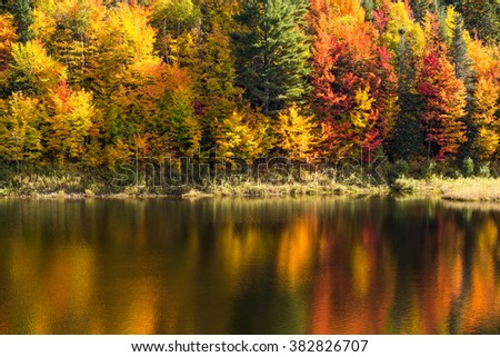 Vermont fall foliage in peak season with trees along the shoreline