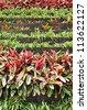 Vertical garden - stock photo