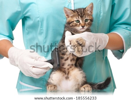 Veterinarian combs a small fluffy kitten over white background