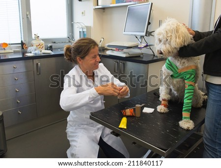 Veterinarian giving bandage to the wounded dog