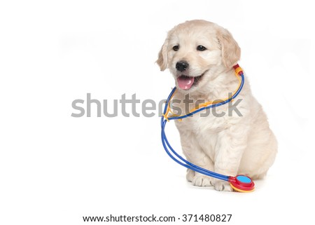 Veterinarian Golden Retriever Cute Puppies