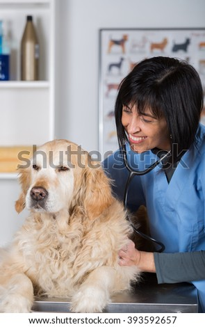 Veterinary performing a dental inspection to a Golden Retriever in clinical