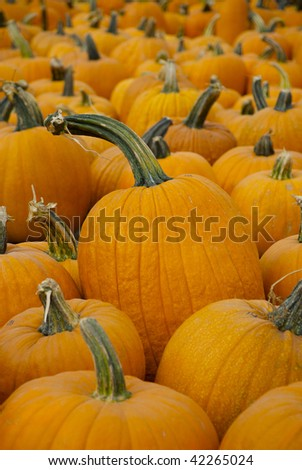 Vibrant Orange Pumpkins