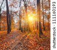 Vibrant sunset in the autumn forest - stock photo