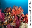 Vibrantly coloured soft coral reef, Red Sea, Egypt. - stock photo