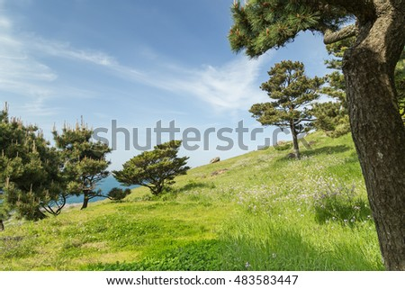 "View of a blue sky, grassland and trees on a slope at the Seongsan Ilchulbong (""Sunrise Peak"") on Jeju Island in South Korea."
