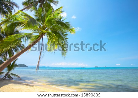 View of nice tropical empty sandy beach with some palm