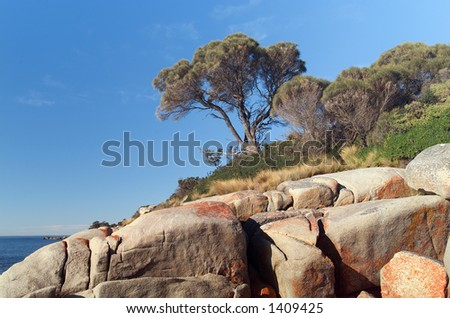 View of Red Lichen covered boulders and landscape near the ocean
