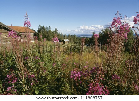 View of shack with flowers in foreground