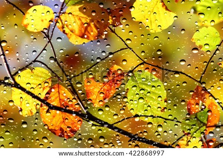 View of the colors of autumn, leaves through the window glass covered by raindrops
