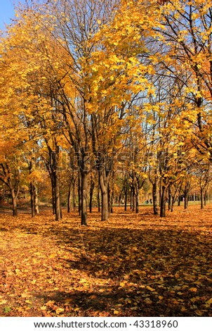view of yellow autumn park
