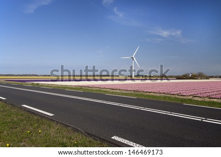 View on a pink hyacinths field with a windmill in the background