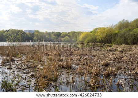 View on lake with shriveled sedge and trees on bank. Moscow, Russia.