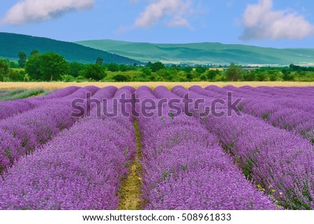 View on the Field of Lavender in Prosenik, Bulgaria