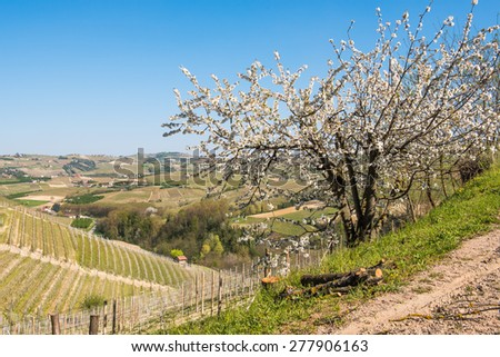 View over the hills in Tuscany with blossom on the foreground