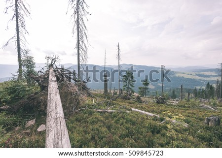 View to the carpathian mountains from forest with lonely trees and clouds above - vintage film look
