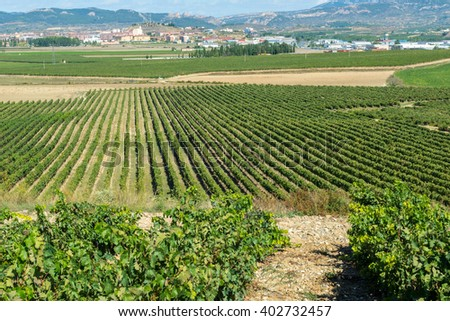 Vineyard, Haro as background, La Rioja (Spain)