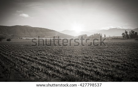 Vineyard or Winery landscape Sunset at a vineyard in Chile in black and white for travel nature agriculture concept