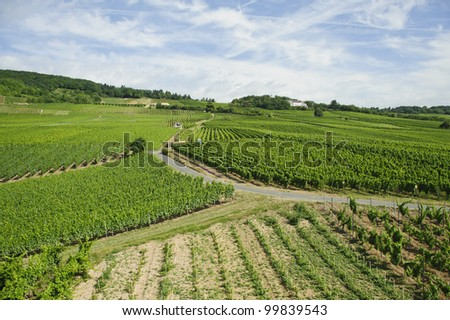 vineyard view of Rhine river Valley in germany