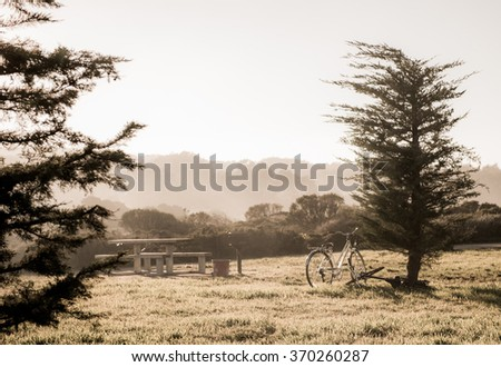 Vintage bicycles standing near the trees in mystery environment with mountain background