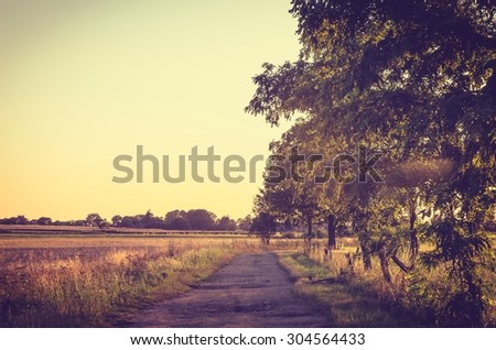 Vintage summer landscape at sunset. Rural path and trees at sunset.