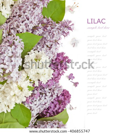 Violet and white lilac flowers bunch isolated on white background