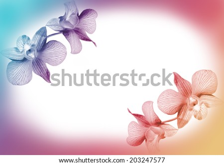 vivid color flower in soft style for background