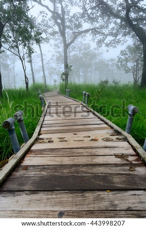 walk way wooden in forest
