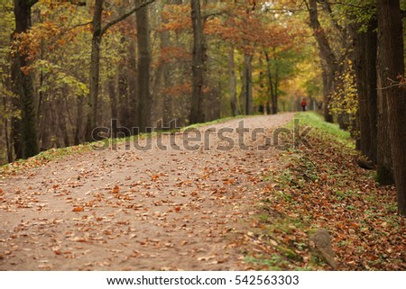 walking in the park in the autumn footpath perspective away