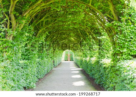 Walkway with green trees