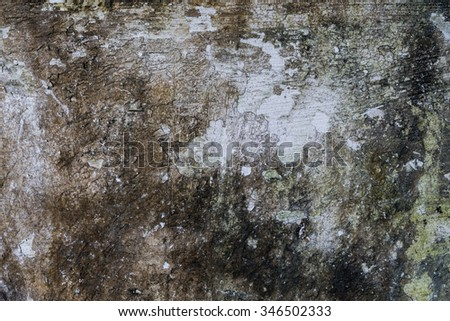 Old concrete wall moss on texture stock photo 565408990 for Removing dirt stains from concrete