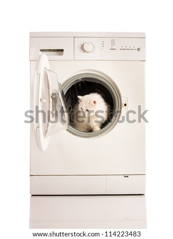 Washer machine and white cat