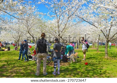 WASHINGTON, DC - APRIL 11: Cherry Blossom Festival on April 11, 2015 in Washington DC,USA. The festival is a spring celebration in Washington, D.C.and people from all over the world come to visit.