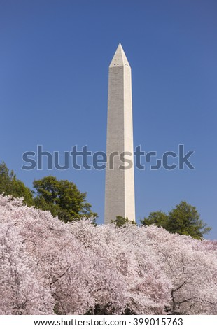 WASHINGTON, DC, USA - MARCH 30, 2016: Cherry trees blossoms at Tidal Basin and Washington Monument.