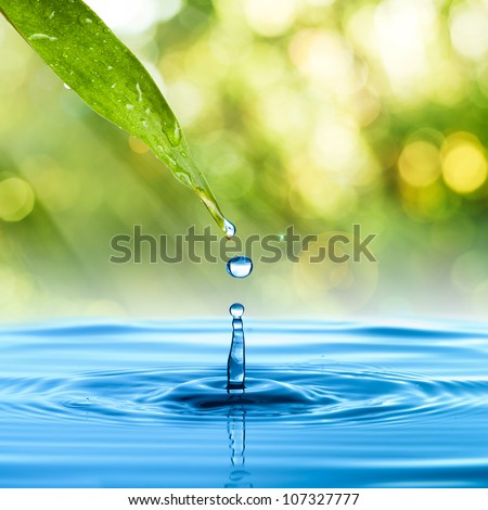 Water drop from green leaf on summer background