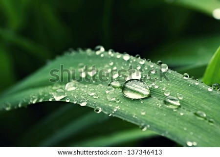 Water droplets sitting on a green leaf