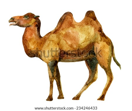 Watercolor camel illustration