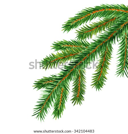 Watercolor fir tree, spruce branch. Closeup isolated on white background. Hand painting on paper