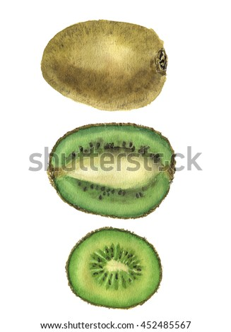 Watercolor kiwi set. Chinese gooseberry illustration isolated on white background. For design, prints or background