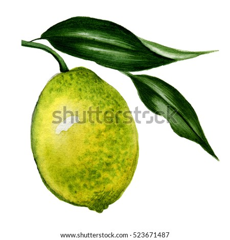 Watercolor lemon with leaves. Hand drawn illustration. Isolated on white.