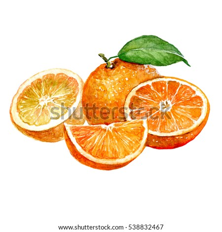 Watercolor orange and sliced orange fruit isolated on a white background illustration.