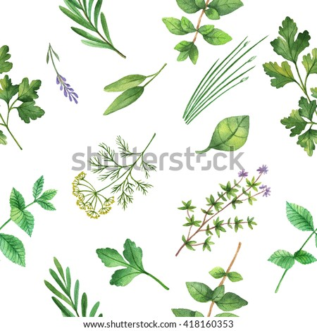 oregano herbal supplement