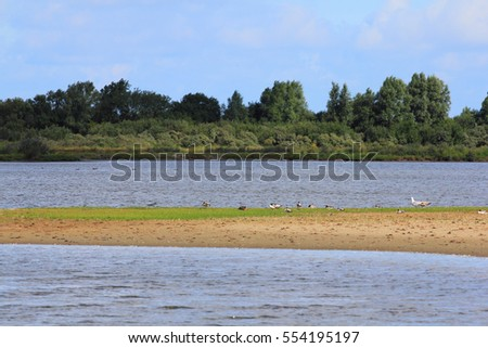 Waterfowl on riverbank, forest in background