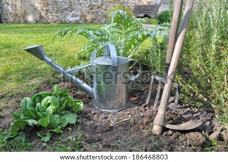 Patch rhubarb clay forcing pots stock photo 169536827 for Vegetable garden tools