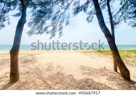 Way to the sand tropical beach between frame of two australian pine against bright sunlight